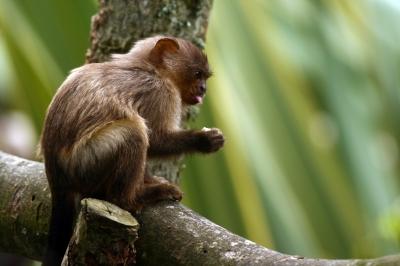 Germany's Beliebers manage monkey business